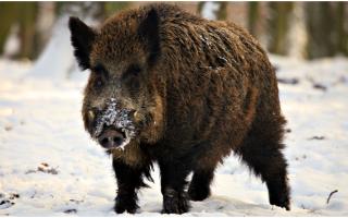 Купить путевку на общедоступные охотничьи угодья воронежской области