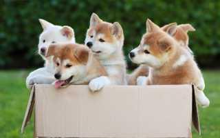 Каких собак выгодно разводить на продажу